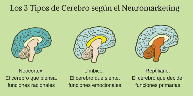 ¿Qué es el neuromarketing? Descubre los tres tipos de cerebros